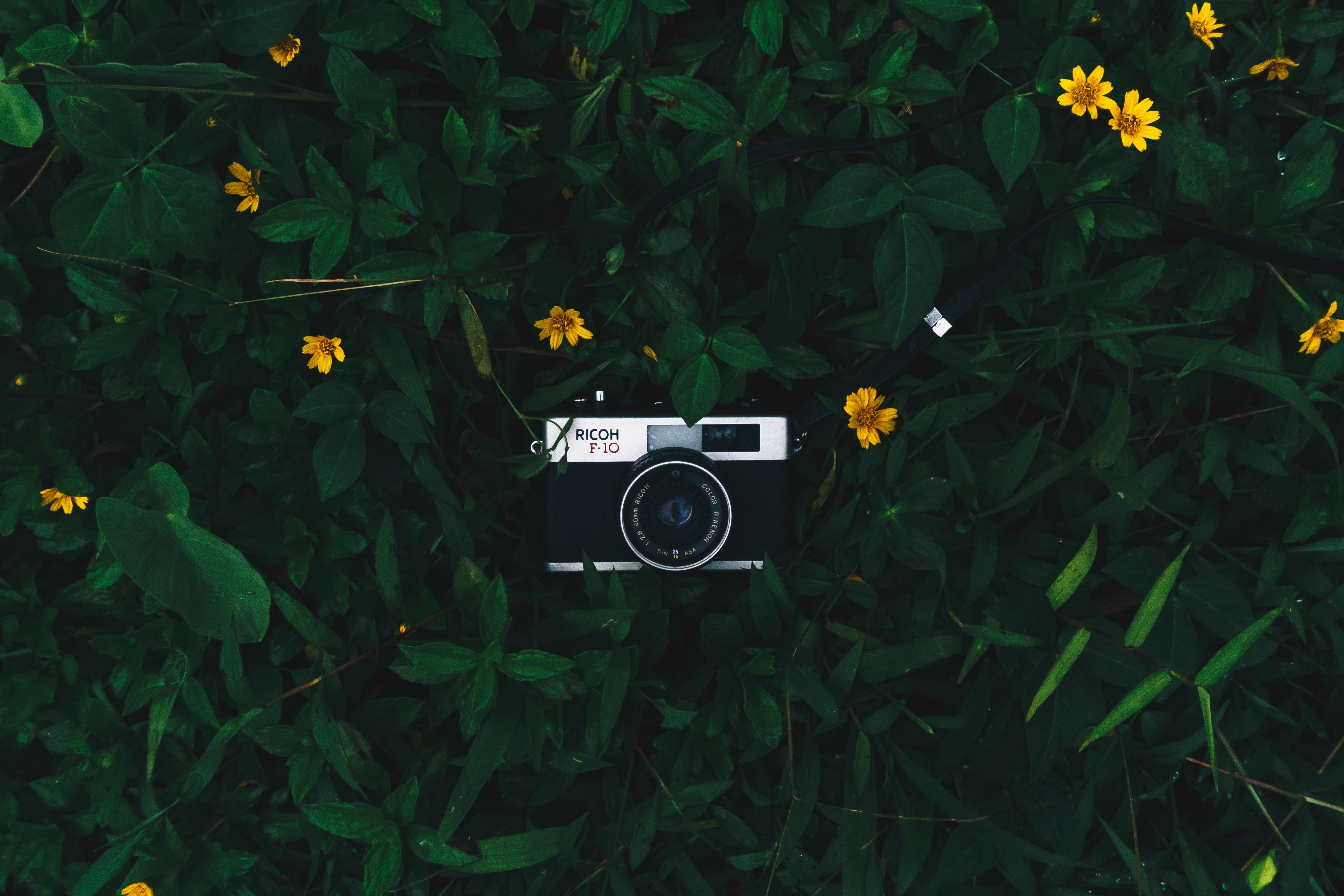 147715 Screensavers and Wallpapers Lens for phone. Download Flowers, Leaves, Lens, Technologies, Technology, Camera pictures for free