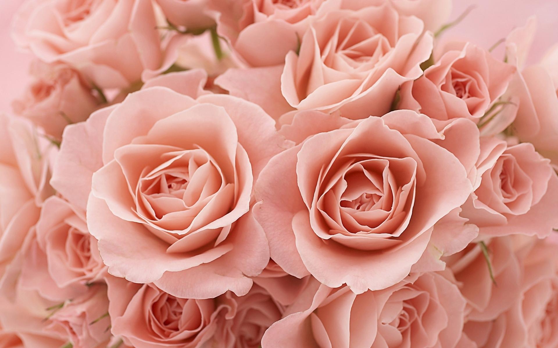 46799 скачать обои Растения, Цветы, Розы - заставки и картинки бесплатно