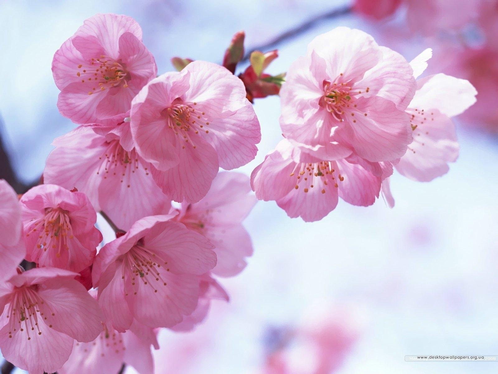 3171 скачать обои Растения, Цветы - заставки и картинки бесплатно