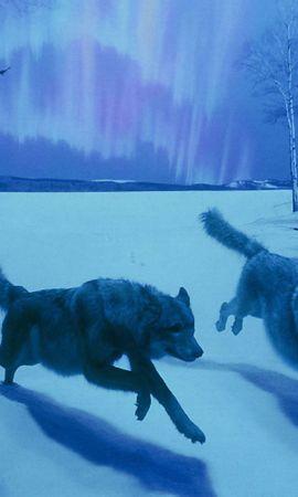 37876 baixar papel de parede Animais, Lobos - protetores de tela e imagens gratuitamente