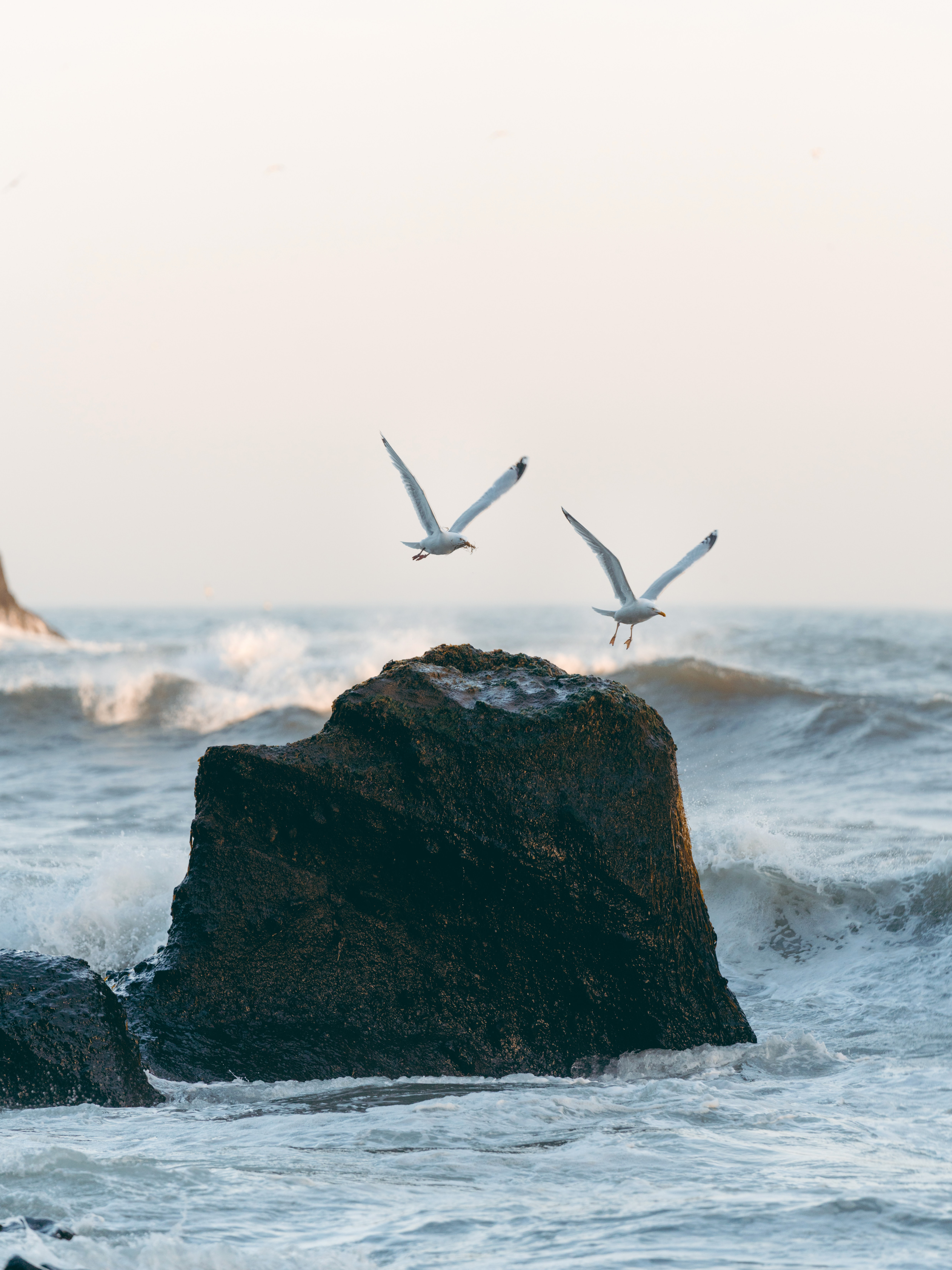 76065 download wallpaper Nature, Rocks, Sea, Spray, Waves, Birds, Seagulls screensavers and pictures for free
