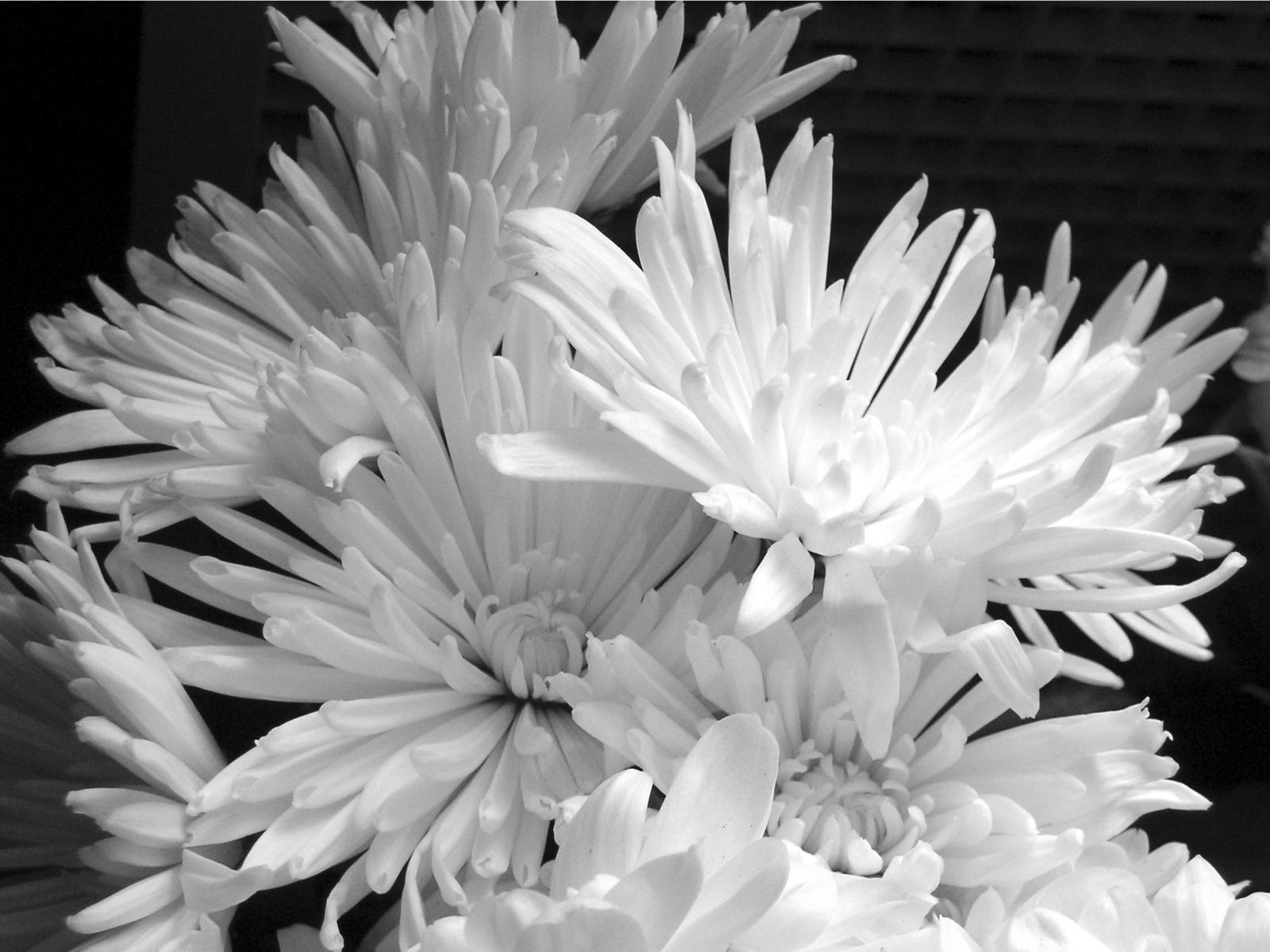 3810 скачать обои Растения, Цветы - заставки и картинки бесплатно