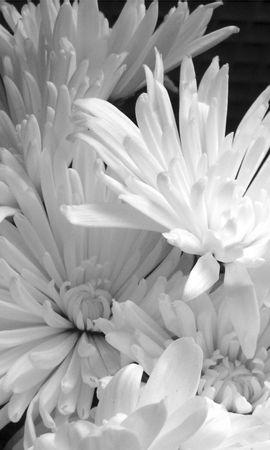 3810 descargar fondo de pantalla Plantas, Flores: protectores de pantalla e imágenes gratis