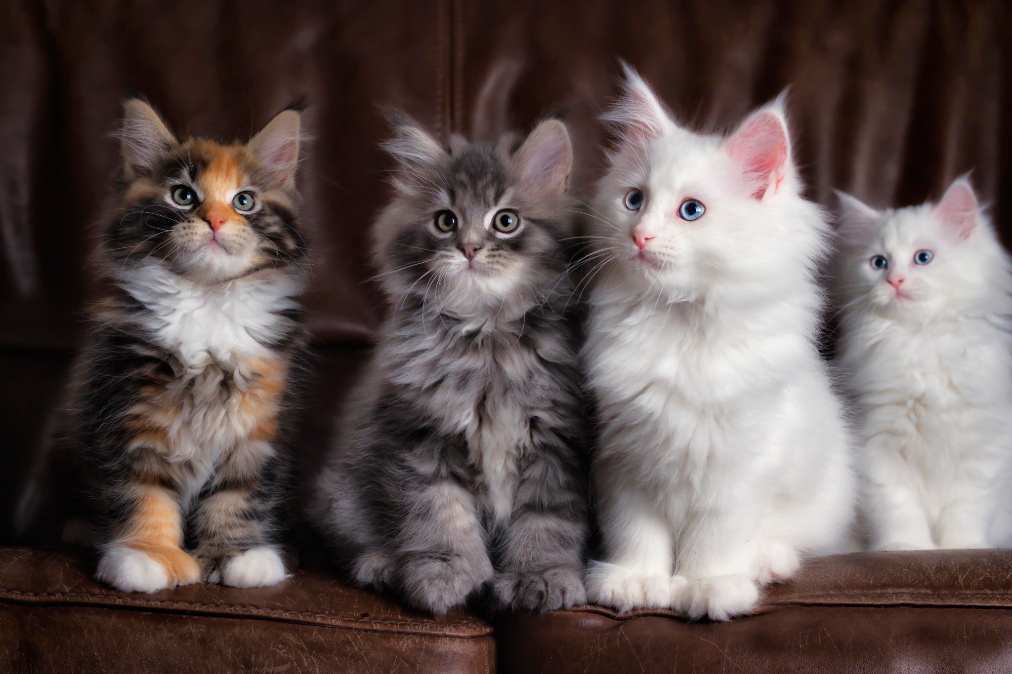 124050 Screensavers and Wallpapers Cats for phone. Download Animals, Kittens, Cats, Fluffy, Multicolored, Cute pictures for free