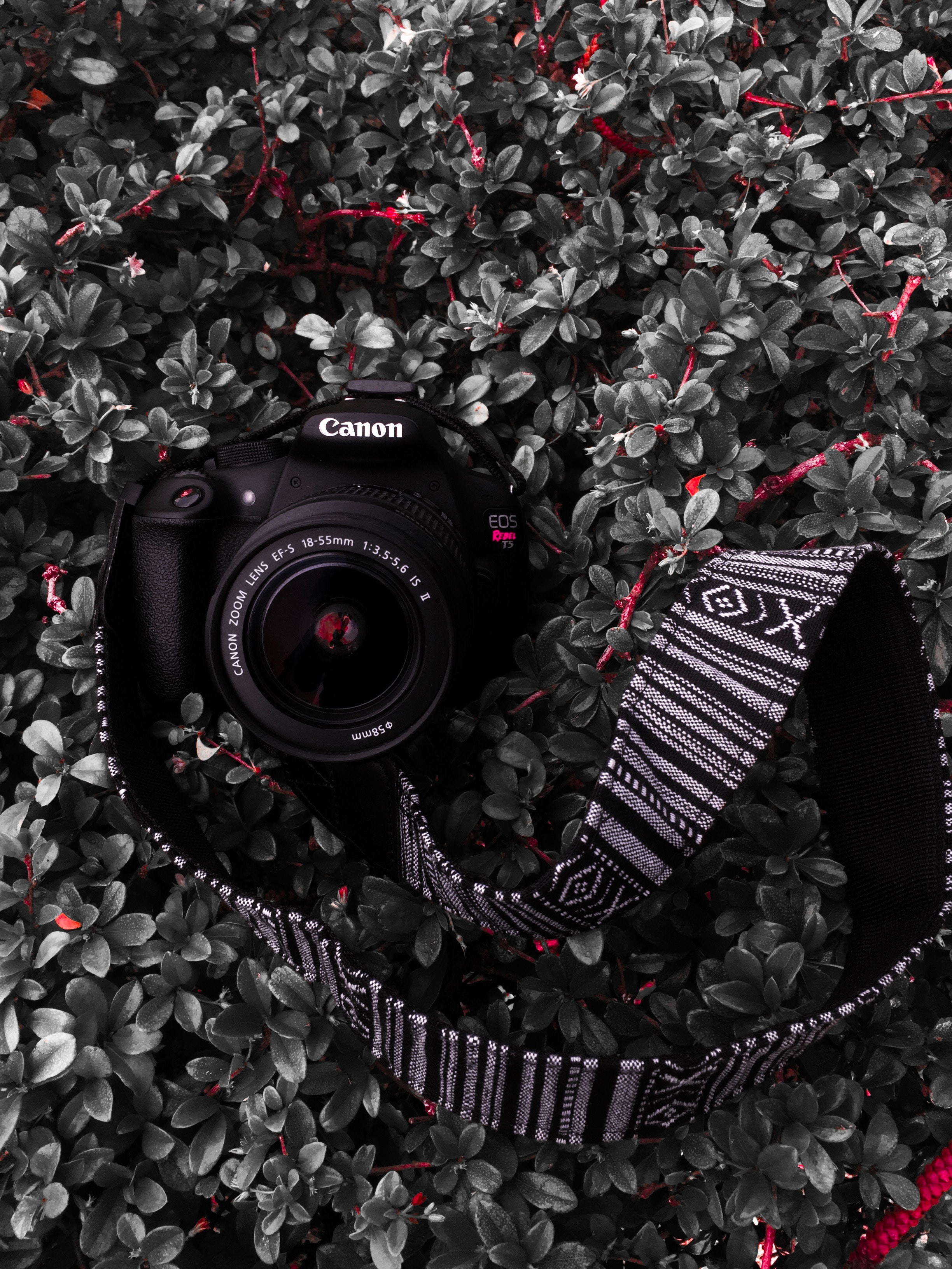 130532 download wallpaper Bush, Plant, Lens, Technologies, Technology, Camera, Strap, Thong screensavers and pictures for free