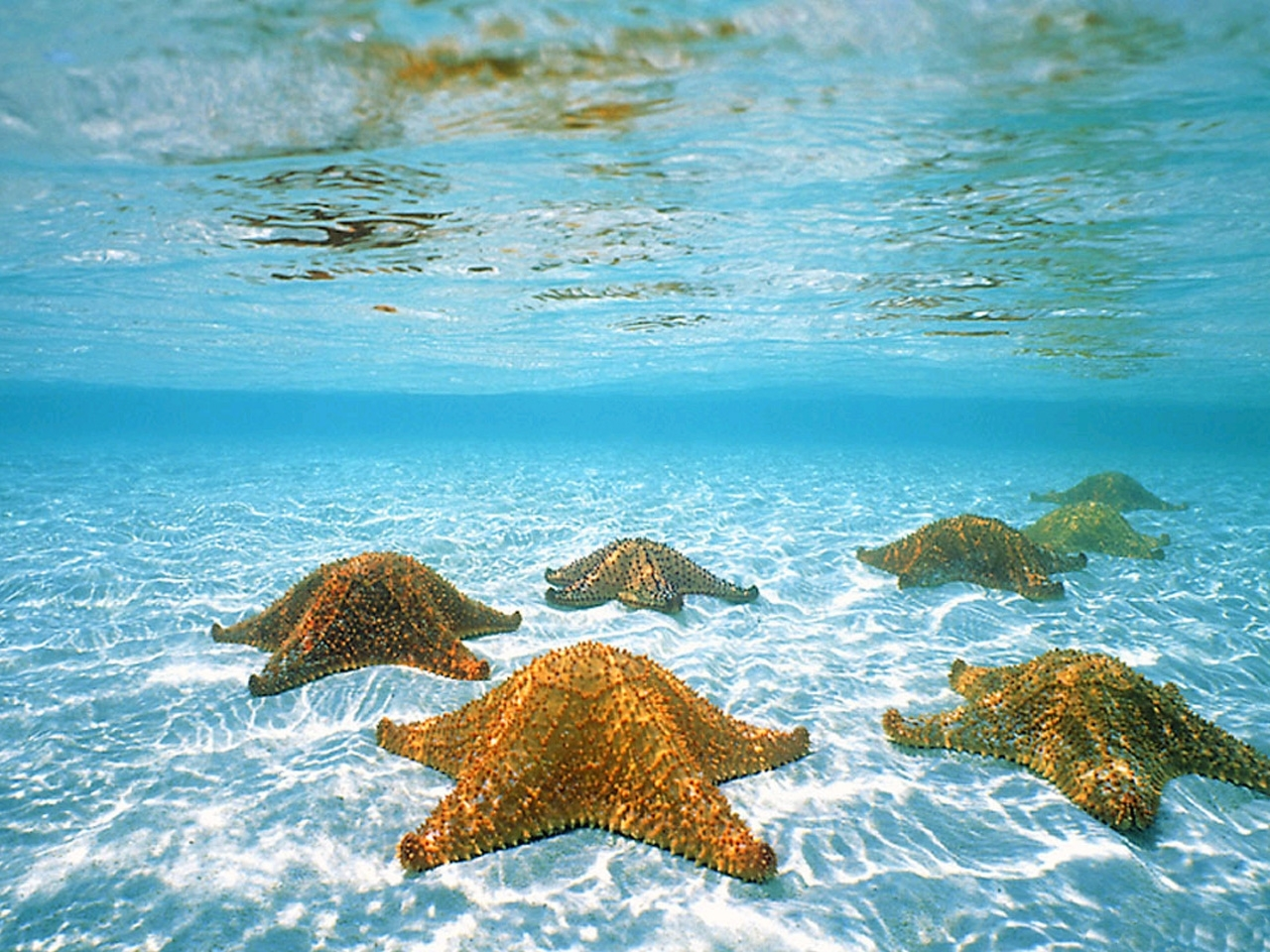 38508 download wallpaper Animals, Landscape, Sea, Starfish screensavers and pictures for free
