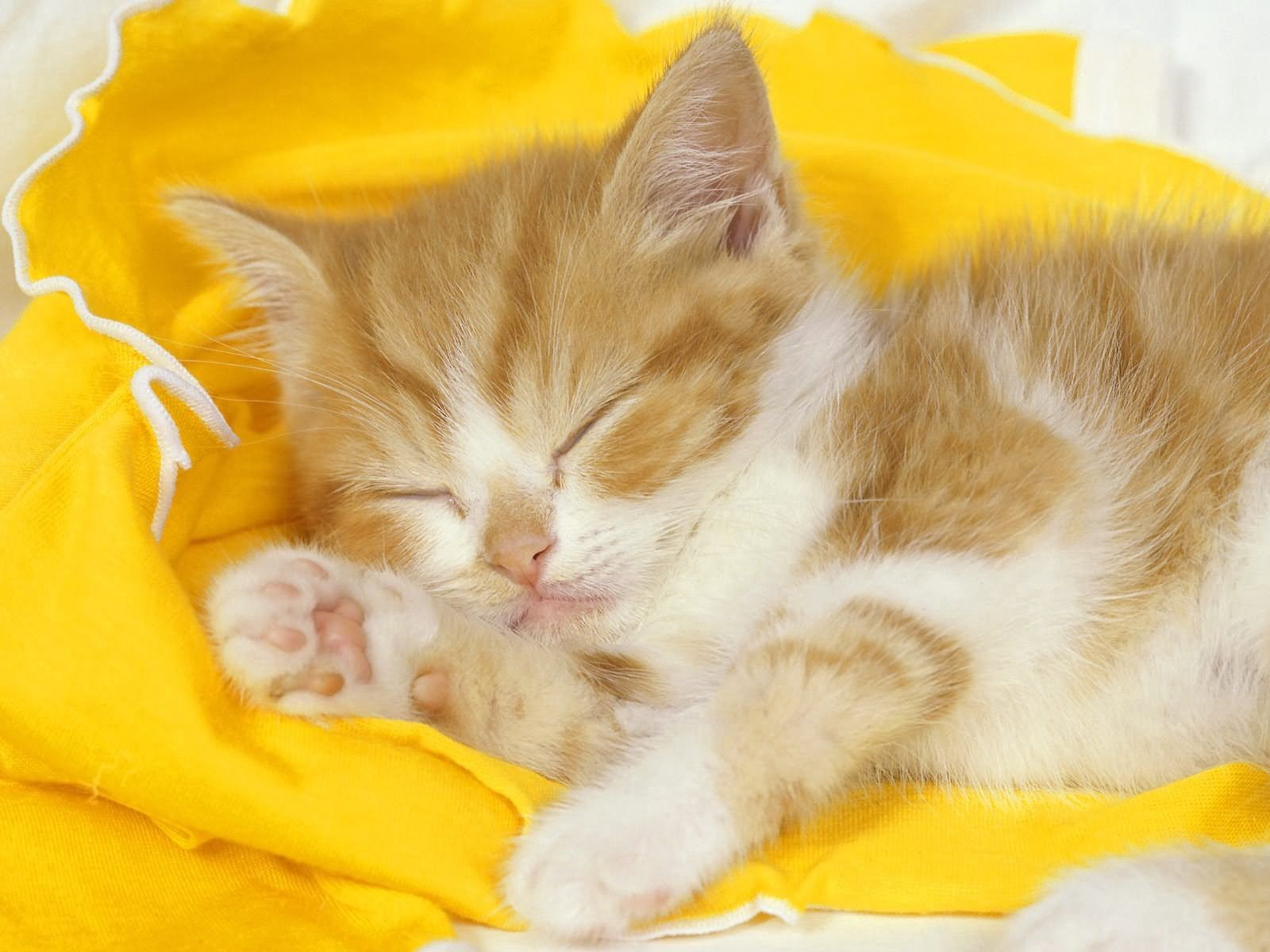 85090 Screensavers and Wallpapers Kitten for phone. Download Animals, Kitty, Kitten, Cloth, Kid, Tot, Sleep, Dream pictures for free