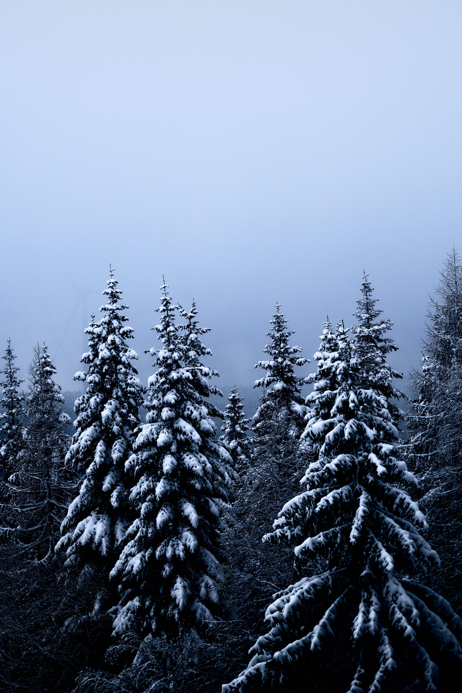 87519 скачать обои Деревья, Снег, Зима, Лес, Природа, Елки - заставки и картинки бесплатно