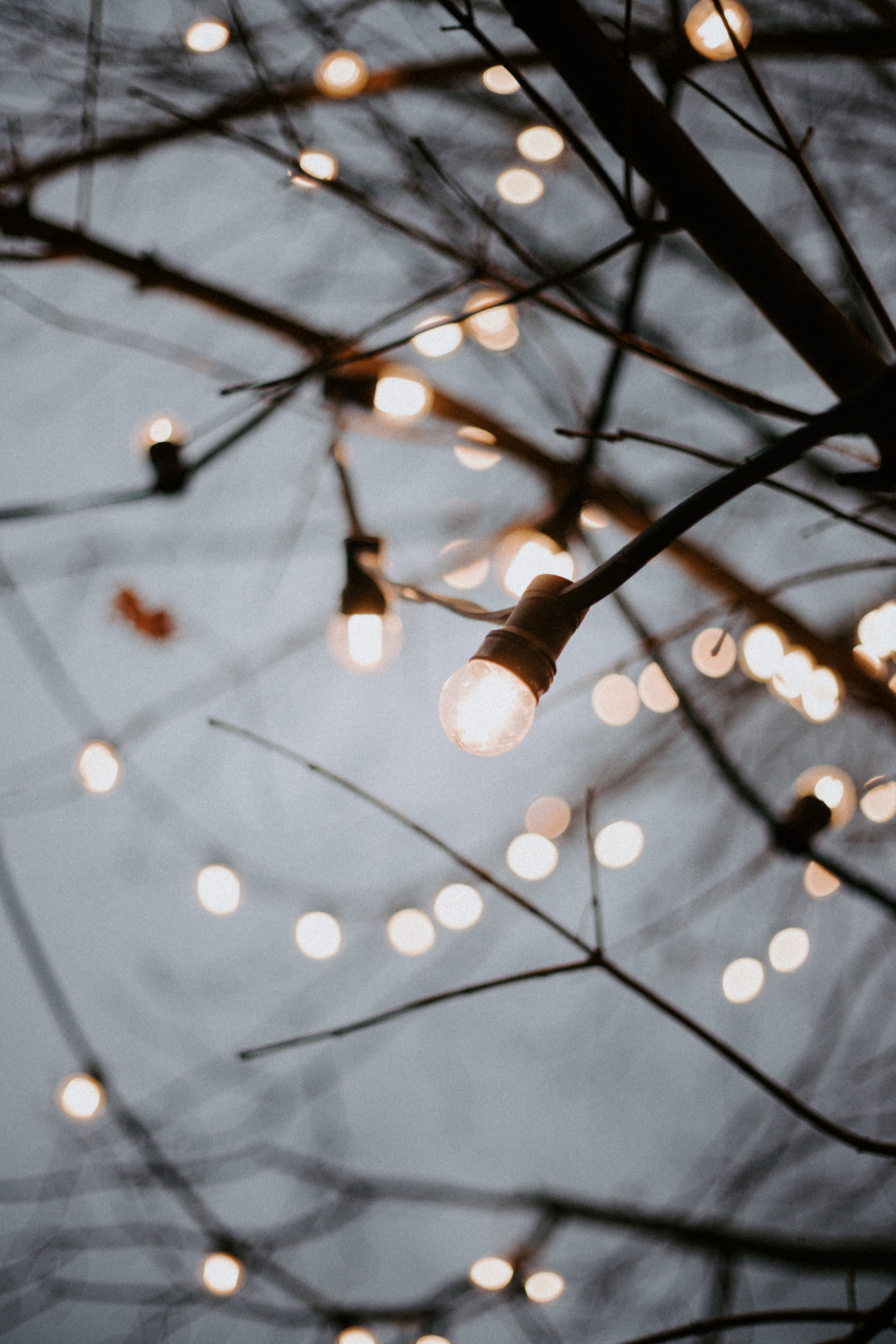 71002 Screensavers and Wallpapers Branches for phone. Download Shine, Light, Miscellanea, Miscellaneous, Branches, Garland, Decoration, Garlands, Light Bulbs pictures for free