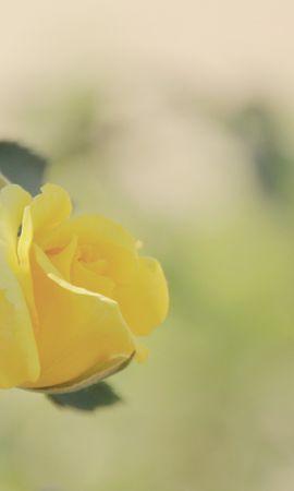 14714 скачать обои Растения, Цветы, Розы - заставки и картинки бесплатно