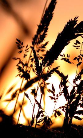 7744 скачать обои Растения, Закат, Трава - заставки и картинки бесплатно