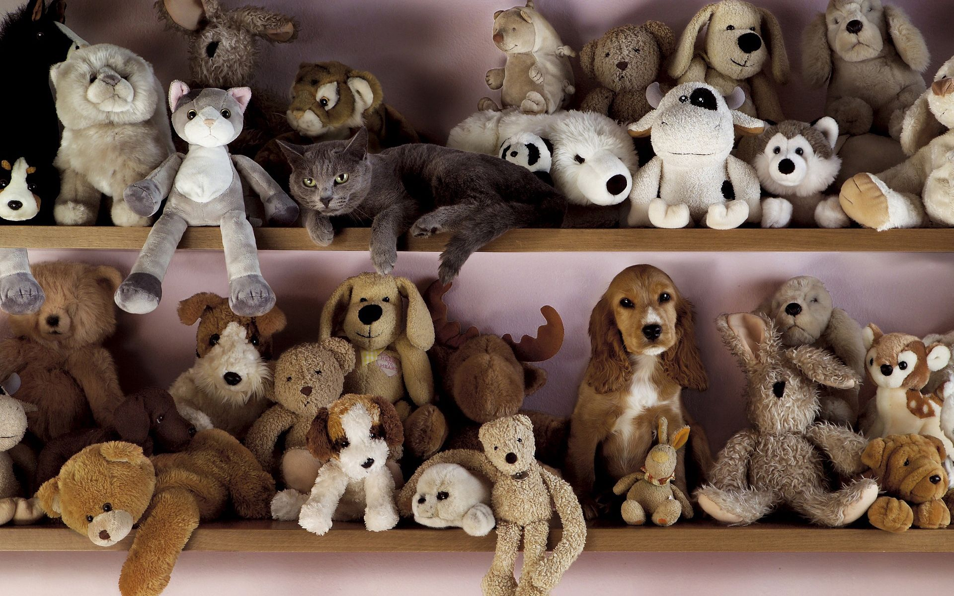 100739 Screensavers and Wallpapers Toys for phone. Download Animals, Toys, Cat, Dog, Shelf pictures for free
