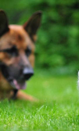 46250 baixar papel de parede Animais, Gatos, Cães - protetores de tela e imagens gratuitamente