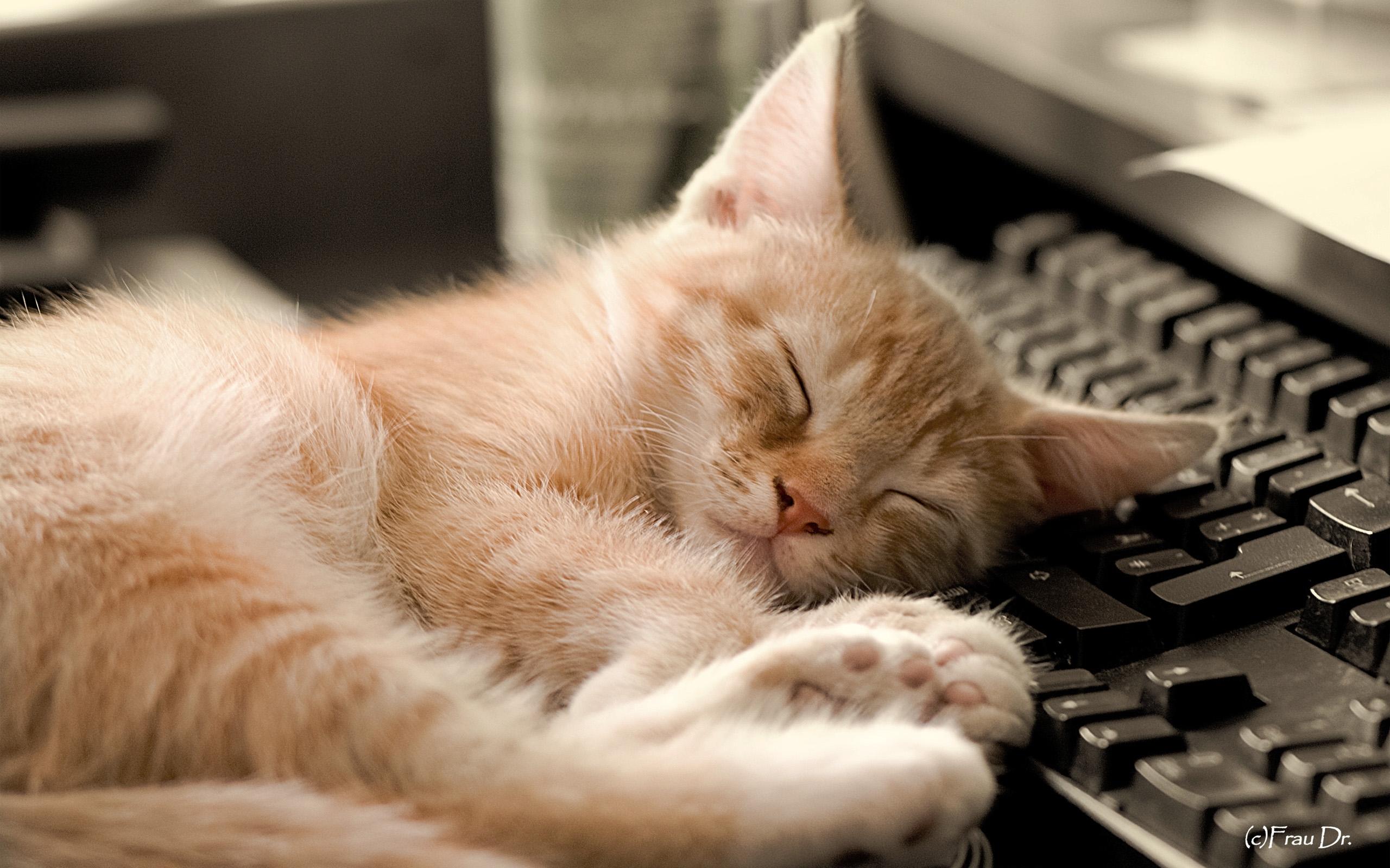 25284 скачать обои Животные, Кошки (Коты, Котики) - заставки и картинки бесплатно