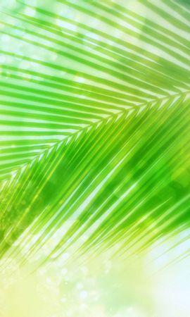 10216 скачать обои Растения, Пальмы - заставки и картинки бесплатно