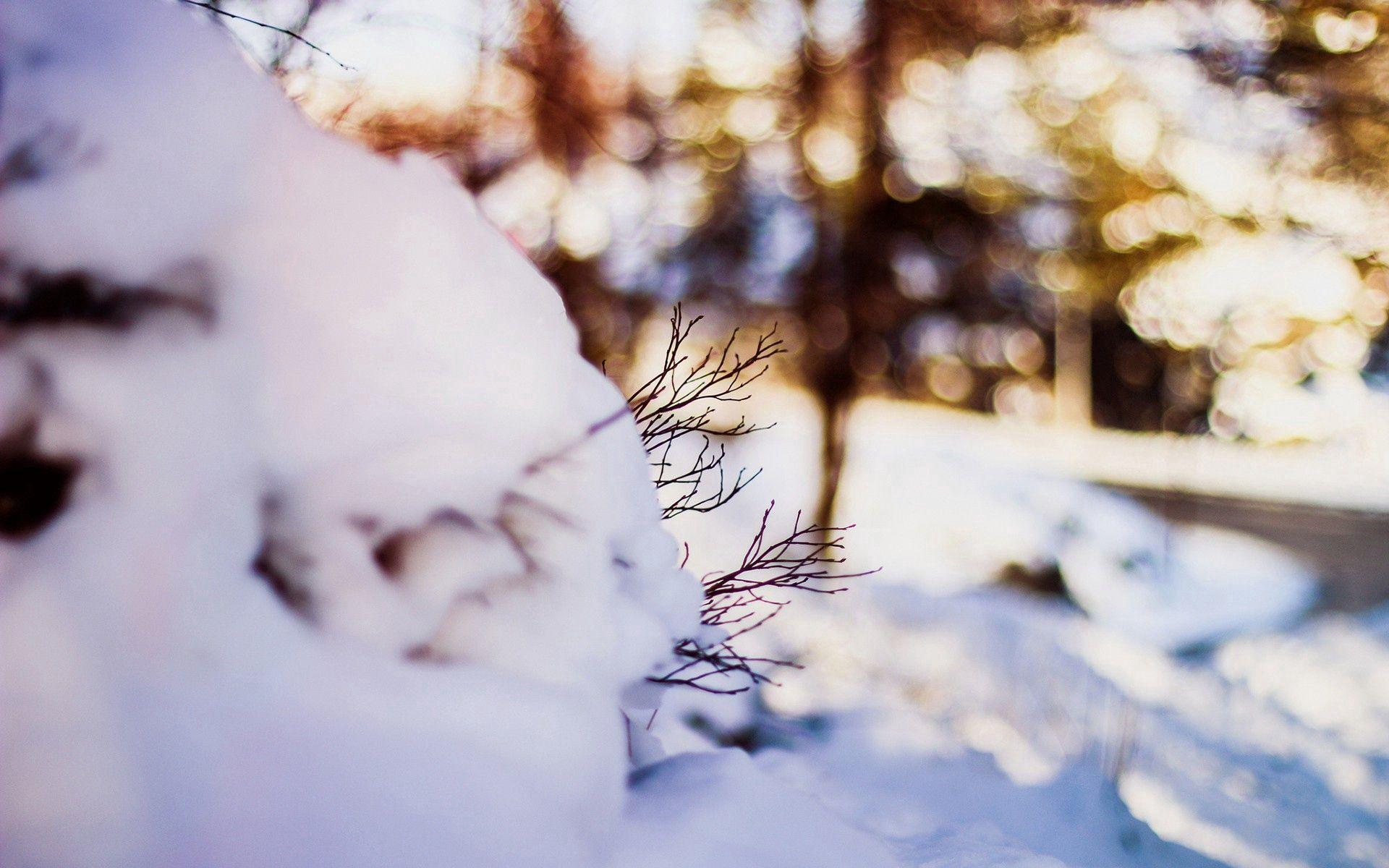 94441 papel de parede 480x800 em seu telefone gratuitamente, baixe imagens Inverno, Neve, Macro, Galhos, Ramos 480x800 em seu celular