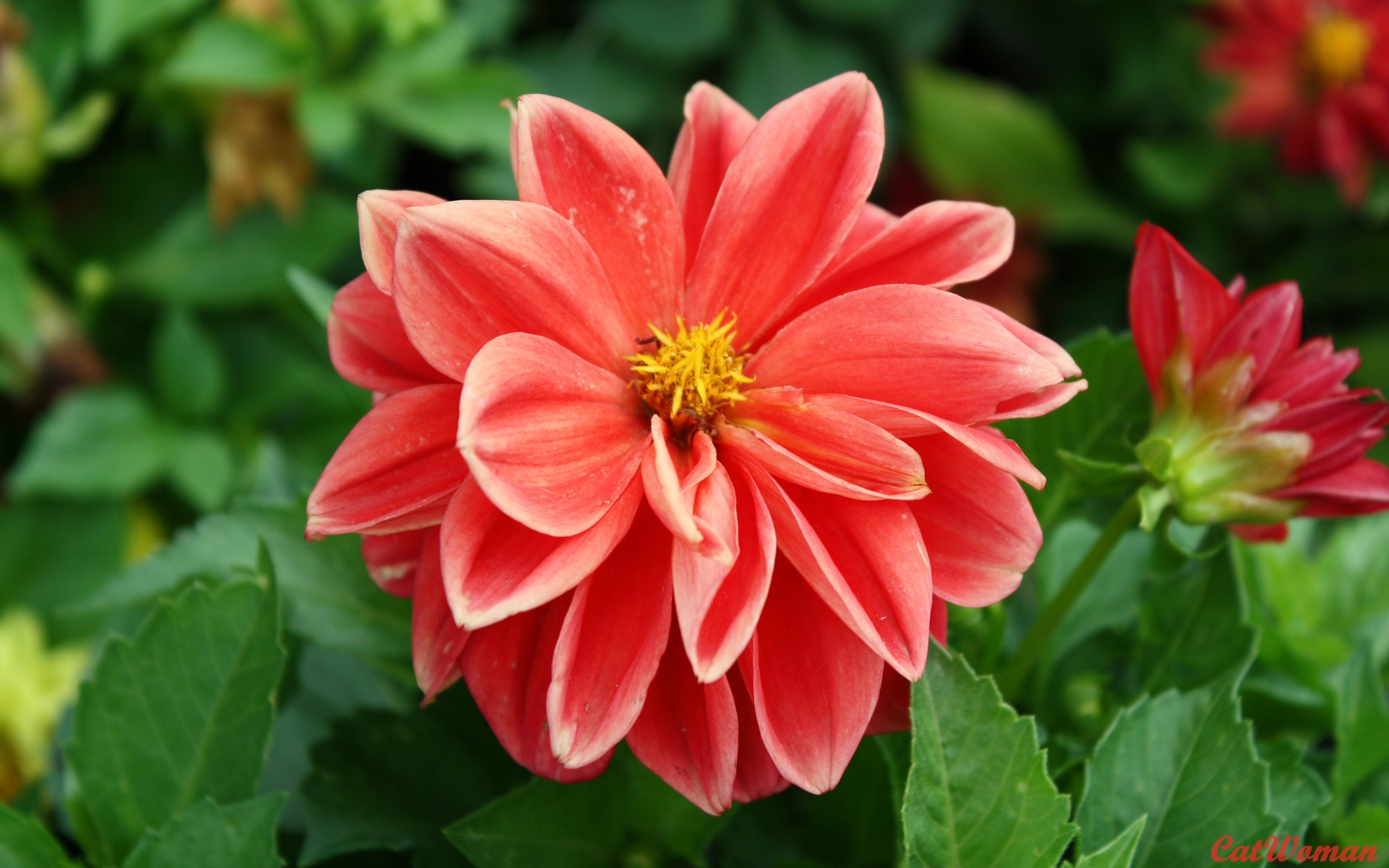 3831 скачать обои Растения, Цветы - заставки и картинки бесплатно