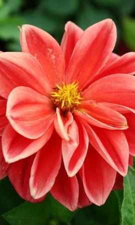 3831 descargar fondo de pantalla Plantas, Flores: protectores de pantalla e imágenes gratis