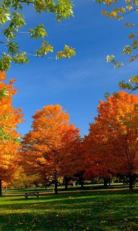 20731 скачать обои Пейзаж, Деревья, Осень - заставки и картинки бесплатно