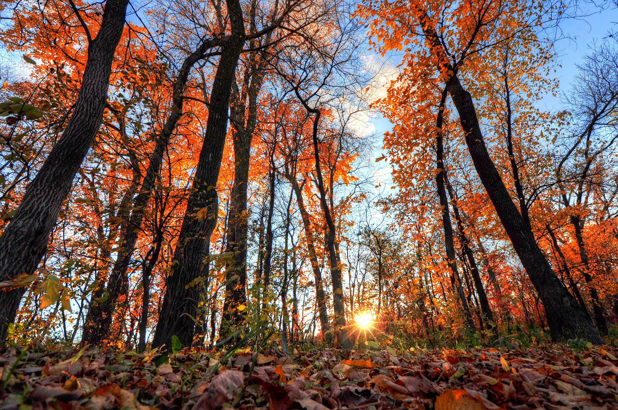 55851 Screensavers and Wallpapers Beams for phone. Download Nature, Trees, Shine, Light, Beams, Rays, Forest pictures for free