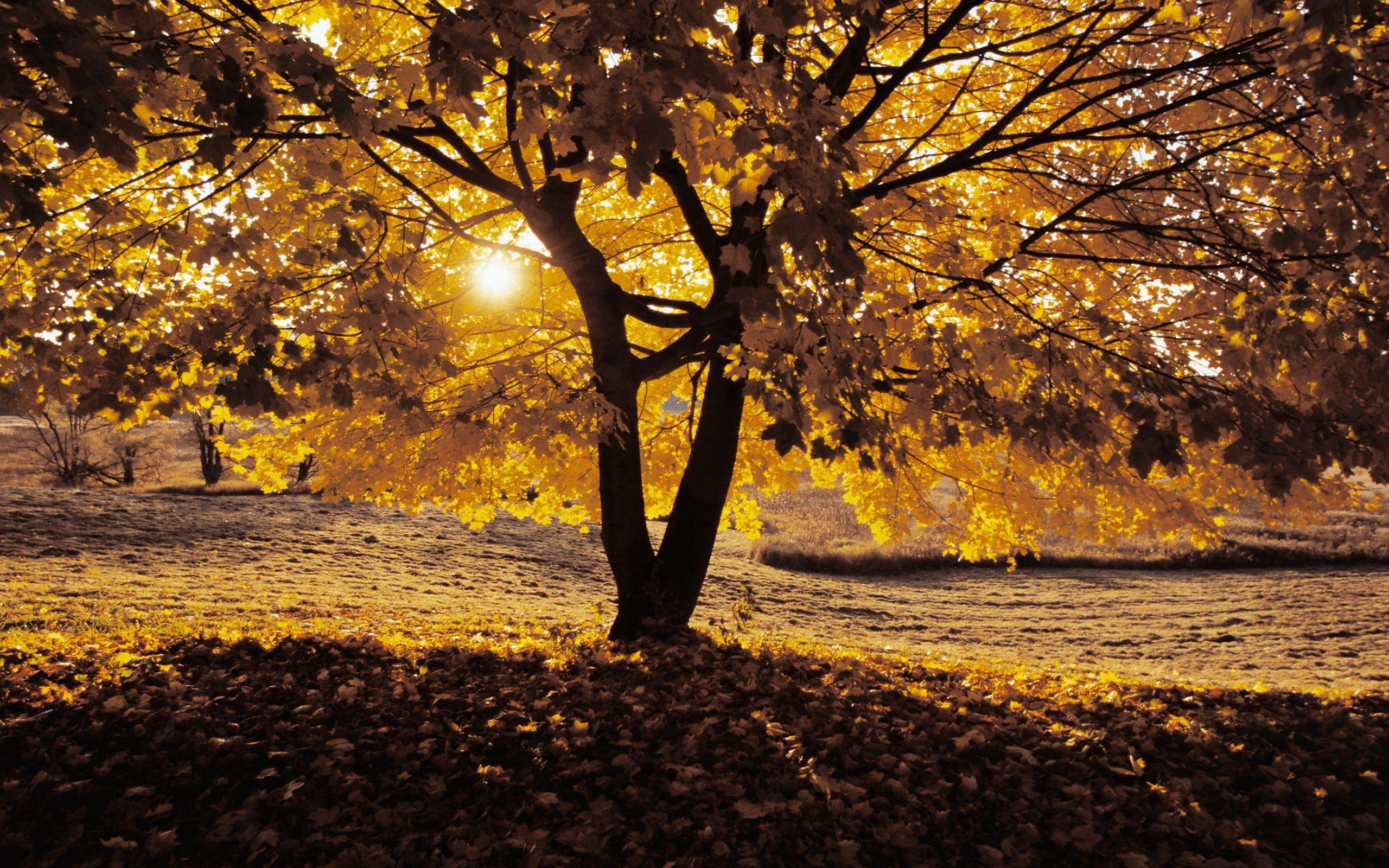 129962 Hintergrundbild 128x160 kostenlos auf deinem Handy, lade Bilder Natur, Herbst, Holz, Baum, Schatten 128x160 auf dein Handy herunter