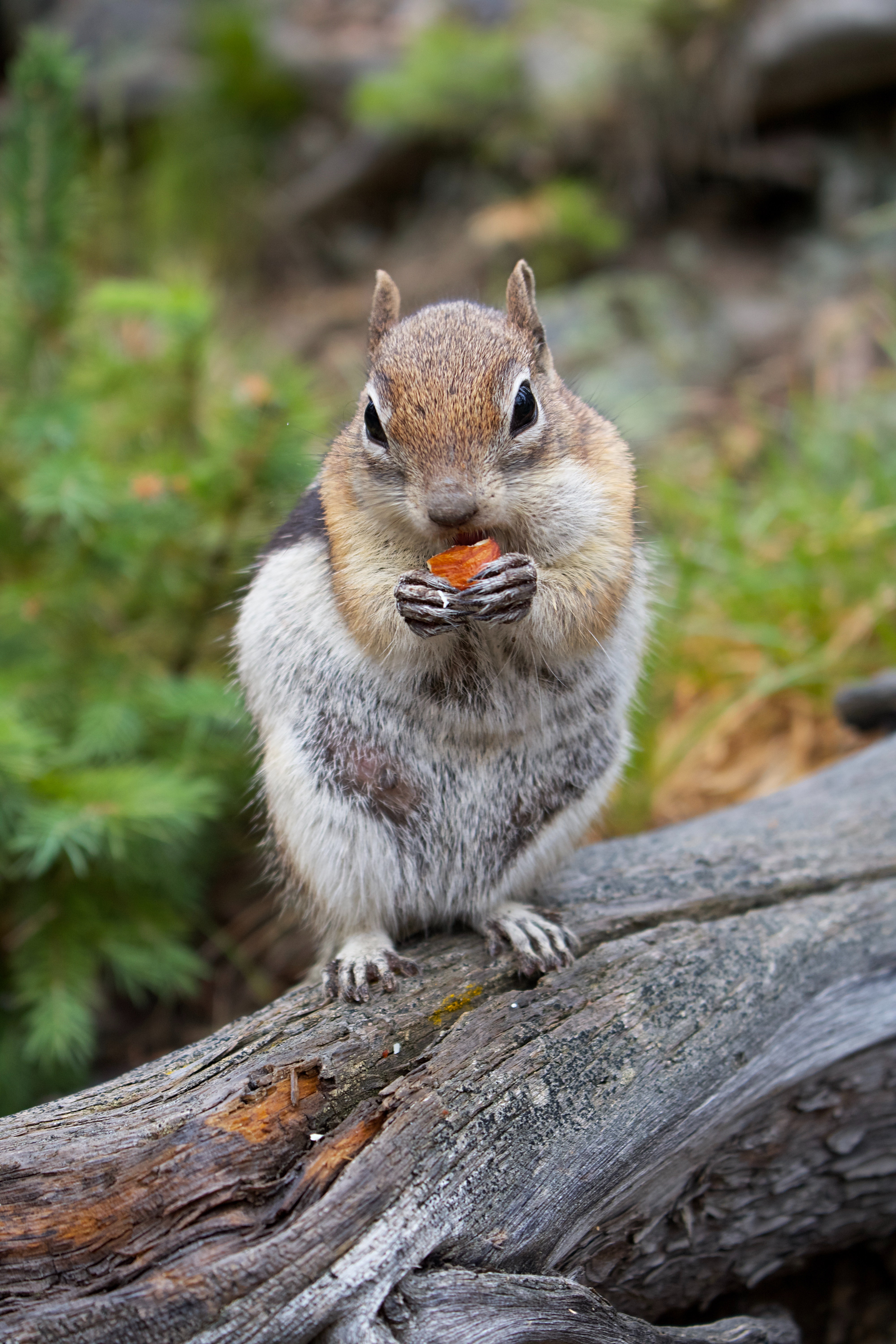 139357 download wallpaper Animals, Chipmunk, Rodent, Animal, Wood, Tree, Bark screensavers and pictures for free