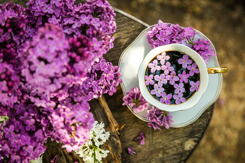 51681 Hintergrundbild herunterladen Blumen, Lebensmittel, Lilac, Coffee, Holz, Eine Tasse, Tasse - Bildschirmschoner und Bilder kostenlos