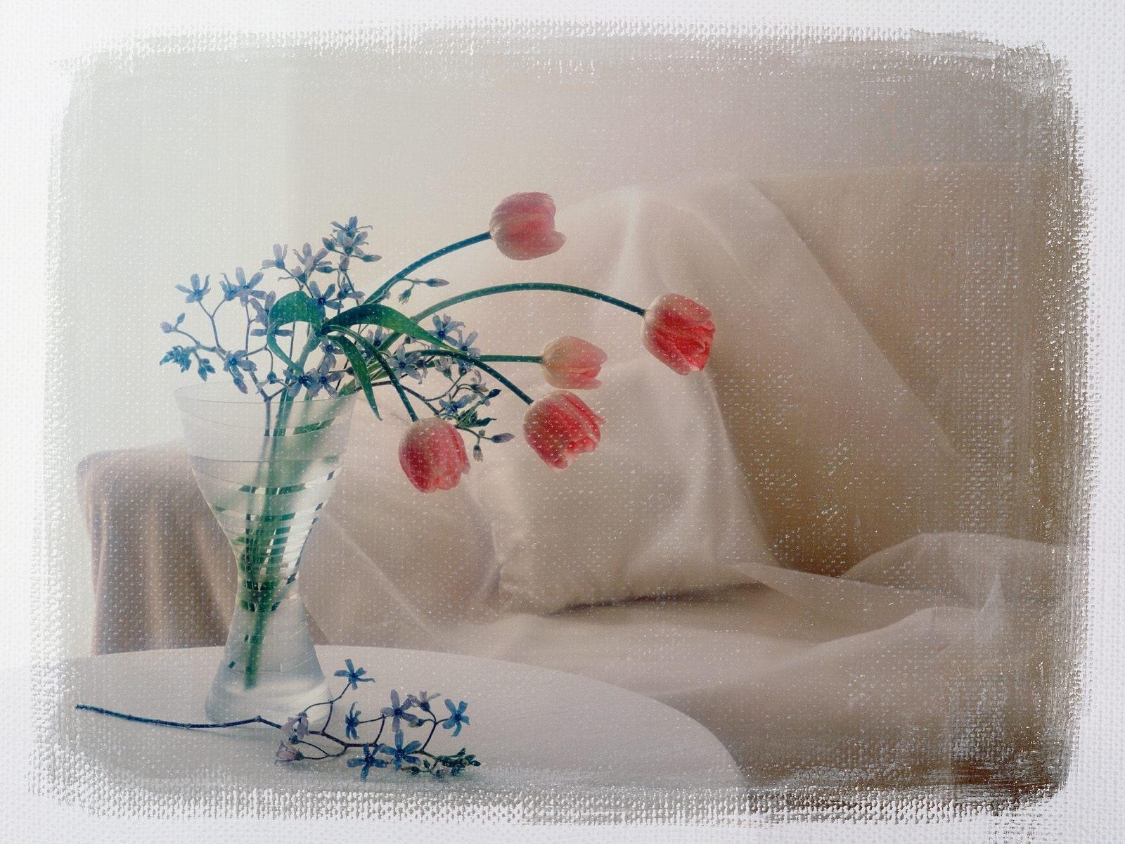 5059 скачать обои Растения, Цветы, Тюльпаны - заставки и картинки бесплатно