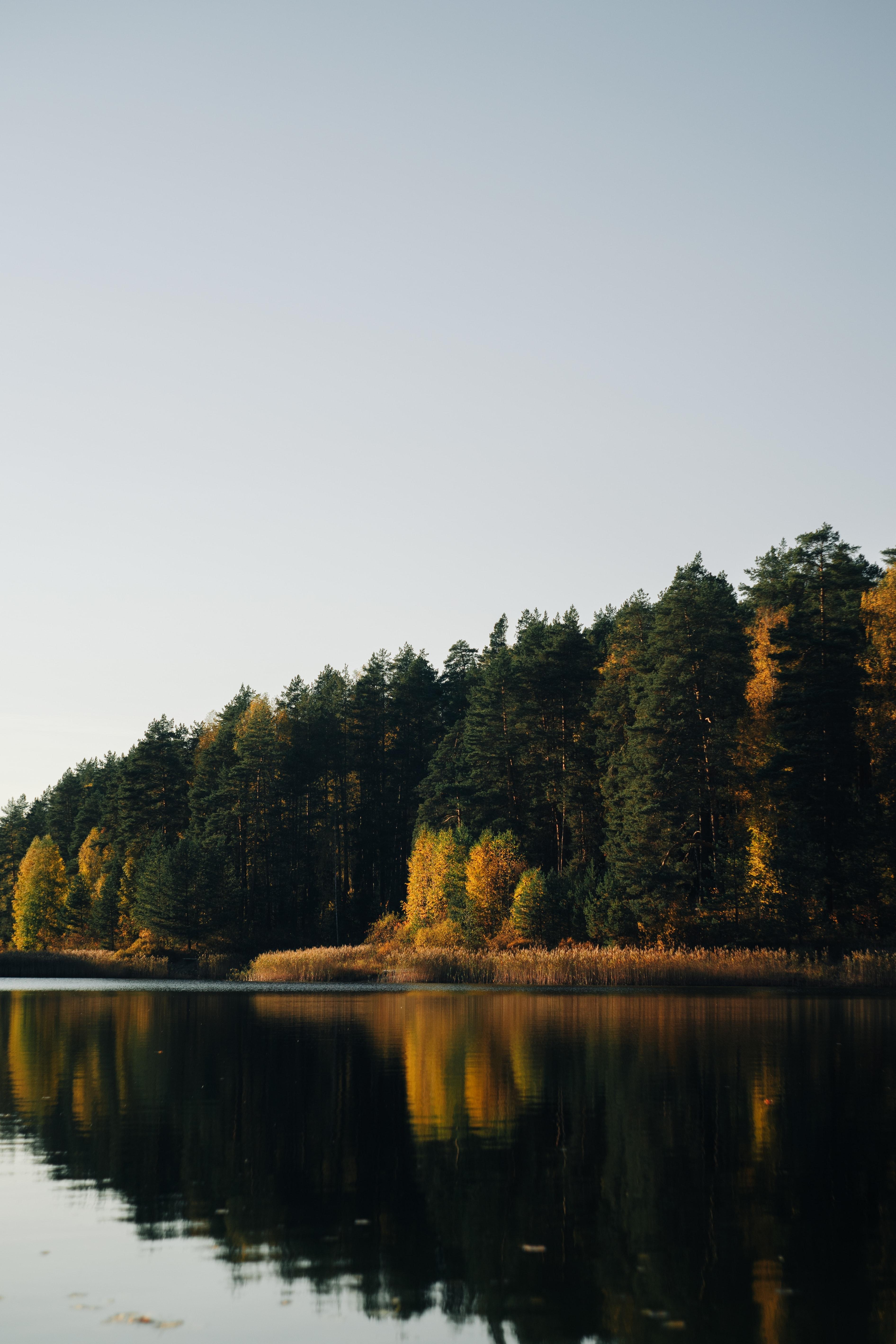 63875 Hintergrundbild 1024x768 kostenlos auf deinem Handy, lade Bilder Natur, Wasser, Bäume, See, Reflexion, Wald 1024x768 auf dein Handy herunter