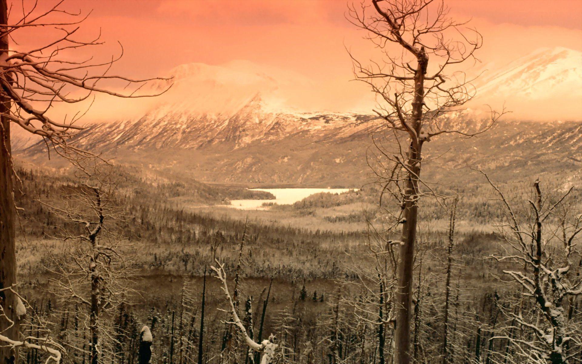 156805 скачать обои Природа, Деревья, Холод, Зима, Снег, Туман, Серый, Горы - заставки и картинки бесплатно