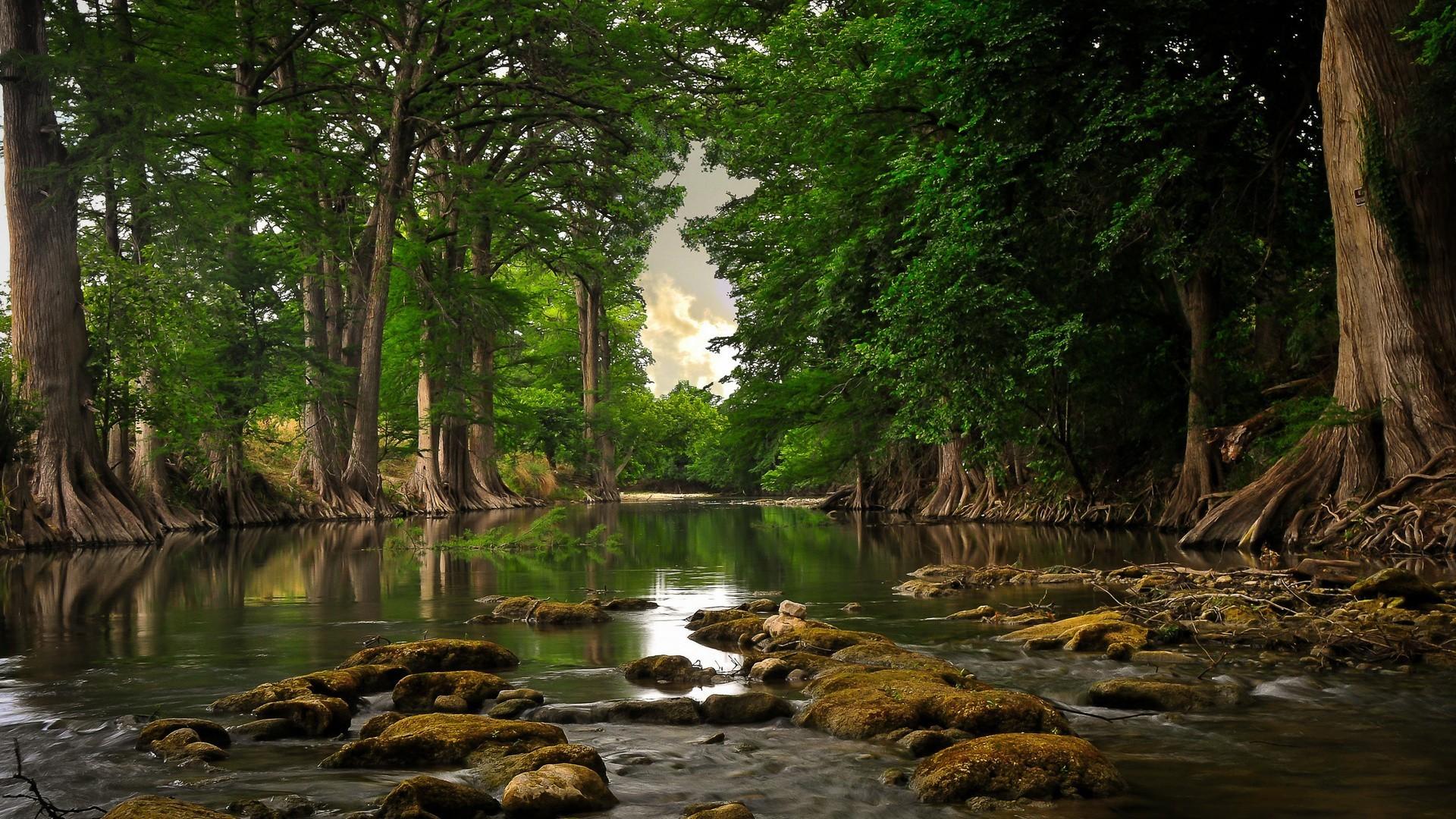 48843 скачать обои Пейзаж, Природа, Деревья - заставки и картинки бесплатно