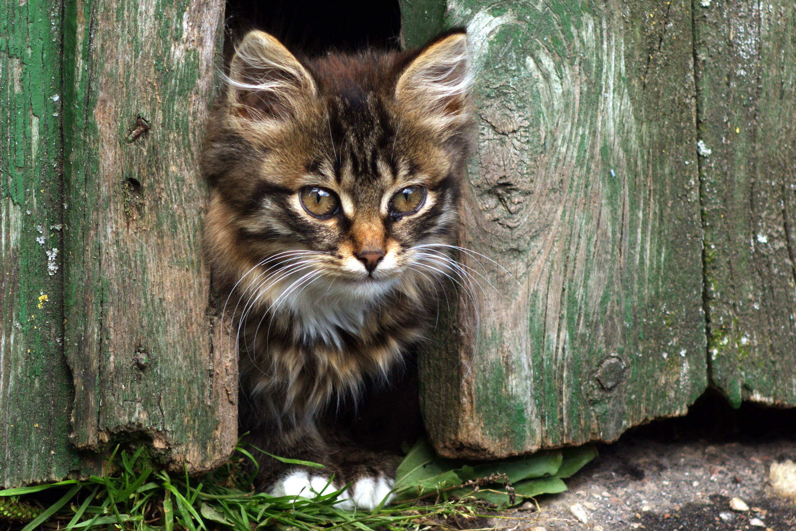 133000 Screensavers and Wallpapers Kitten for phone. Download Animals, Fluffy, Kitty, Kitten, Muzzle, Fence, Sight, Opinion pictures for free