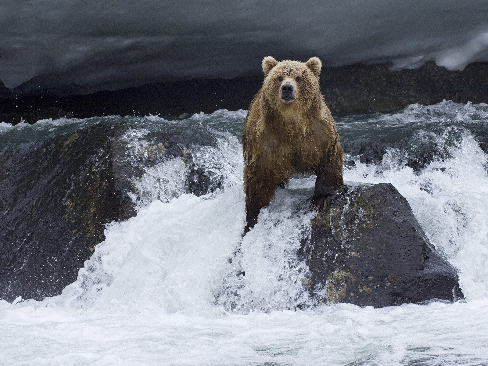 Download mobile wallpaper Bears, Animals, Water for free.