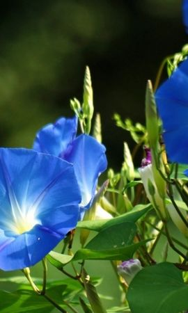 41236 télécharger le fond d'écran Plantes, Fleurs - économiseurs d'écran et images gratuitement