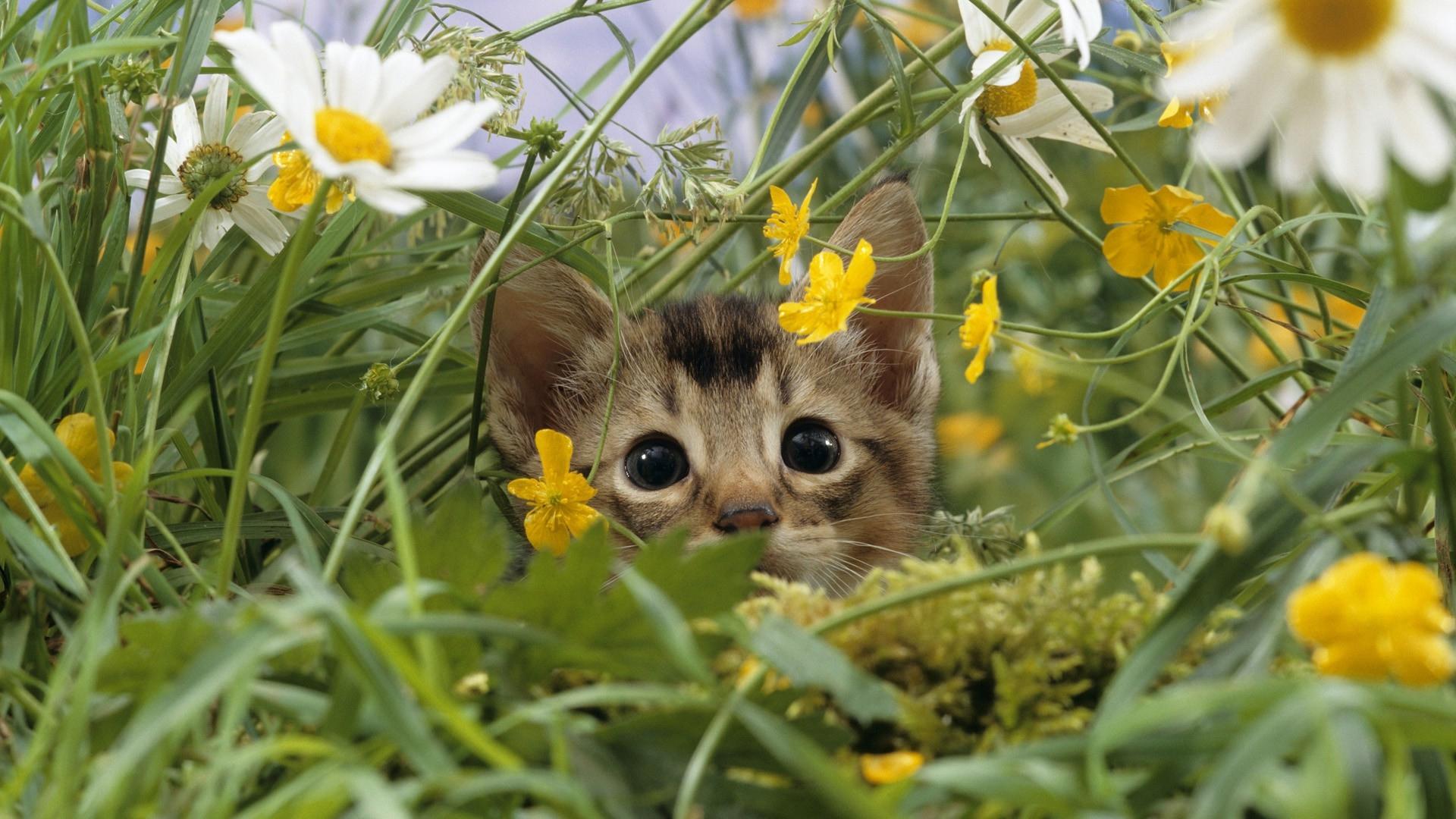26222 Hintergrundbild herunterladen Tiere, Katzen - Bildschirmschoner und Bilder kostenlos