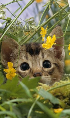 26222 скачать обои Животные, Кошки (Коты, Котики) - заставки и картинки бесплатно