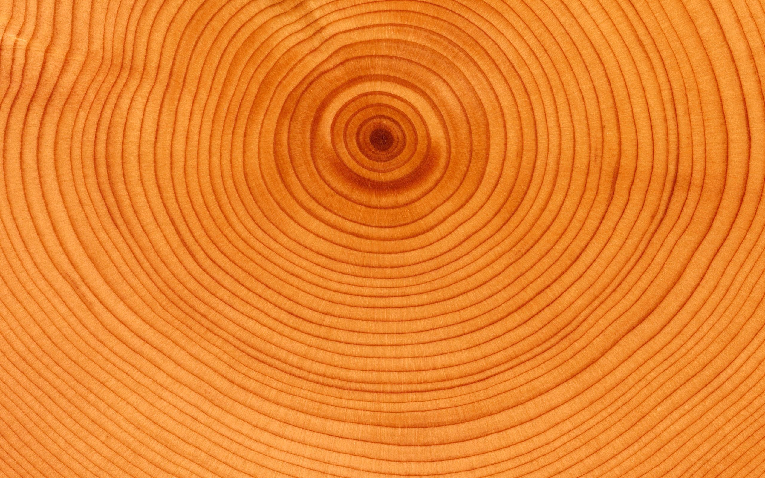 64413 download wallpaper Background, Circles, Wood, Tree, Texture, Textures, Slice, Section, Trunk screensavers and pictures for free