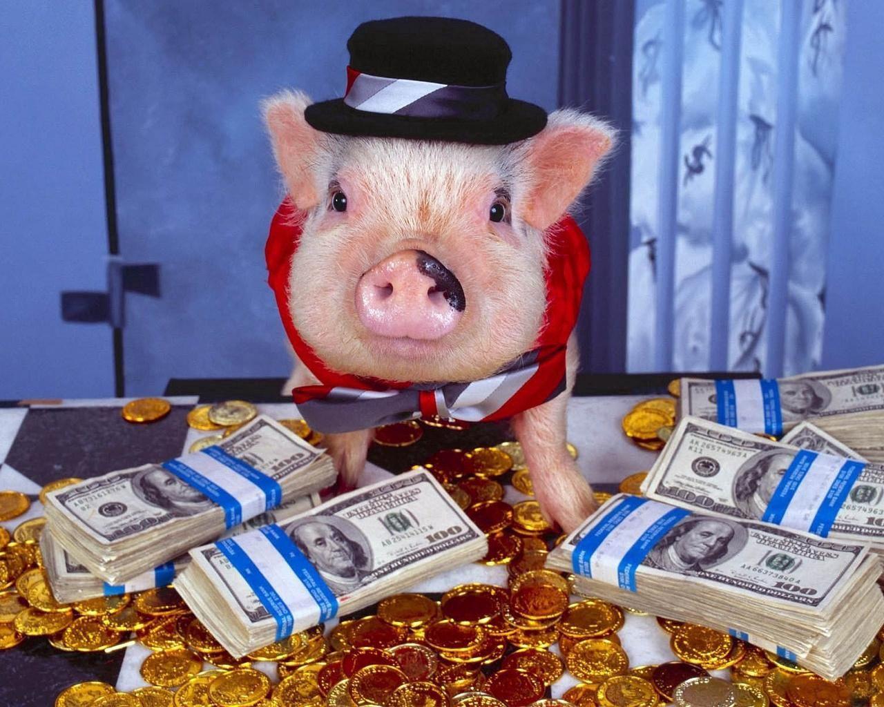 68887 скачать обои Деньги, Золото, Животные, Комната, Шляпа, Свинья, Наряд, Костюм, Монеты - заставки и картинки бесплатно