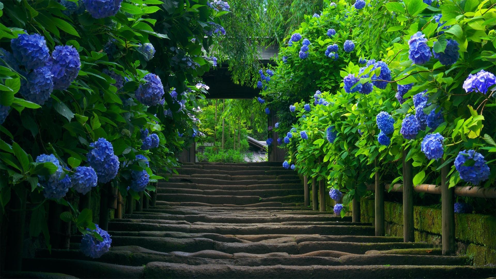 26230 Заставки и Обои Азия на телефон. Скачать Растения, Пейзаж, Цветы, Азия картинки бесплатно