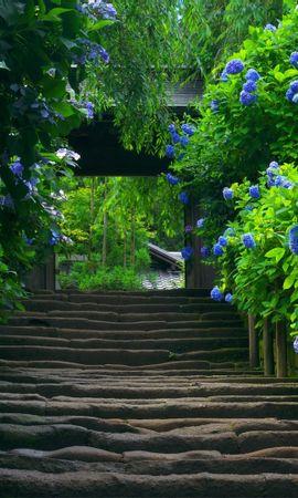 26230 descargar fondo de pantalla Plantas, Paisaje, Flores, Asia: protectores de pantalla e imágenes gratis