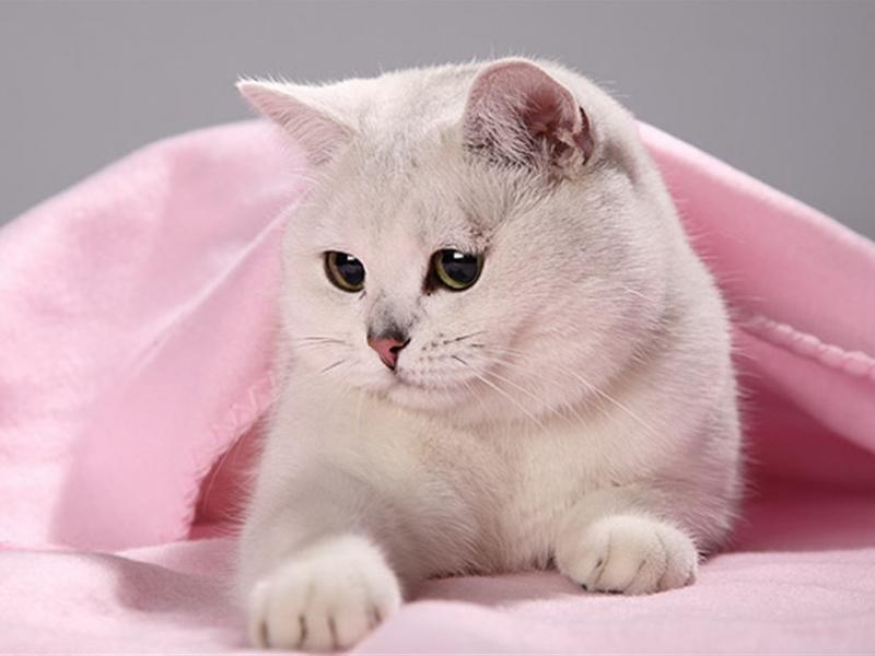 31471 скачать обои Кошки (Коты, Котики), Животные - заставки и картинки бесплатно