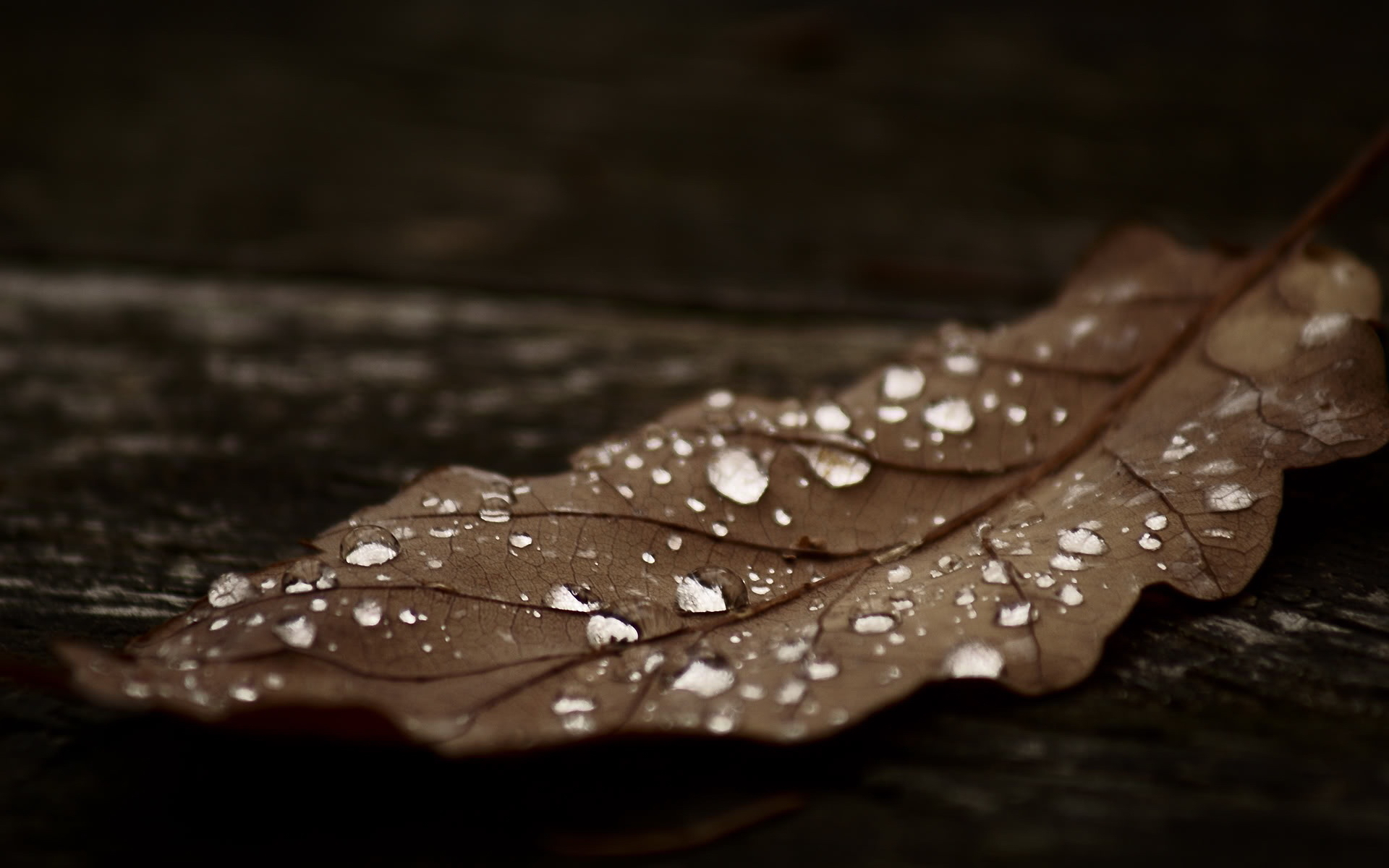 12712 download wallpaper Plants, Water, Autumn, Leaves, Drops screensavers and pictures for free