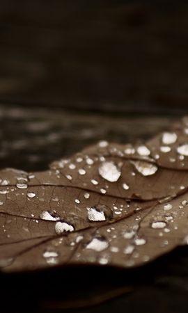 12712 скачать обои Растения, Вода, Осень, Листья, Капли - заставки и картинки бесплатно