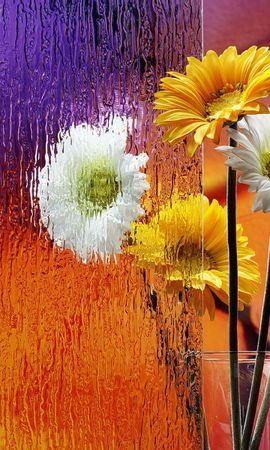 43439 télécharger le fond d'écran Plantes, Fleurs, Objets - économiseurs d'écran et images gratuitement