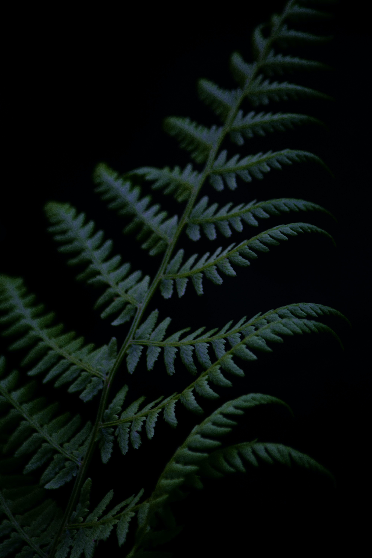 86733 скачать обои Темные, Папоротник, Ветка, Растение, Темный - заставки и картинки бесплатно
