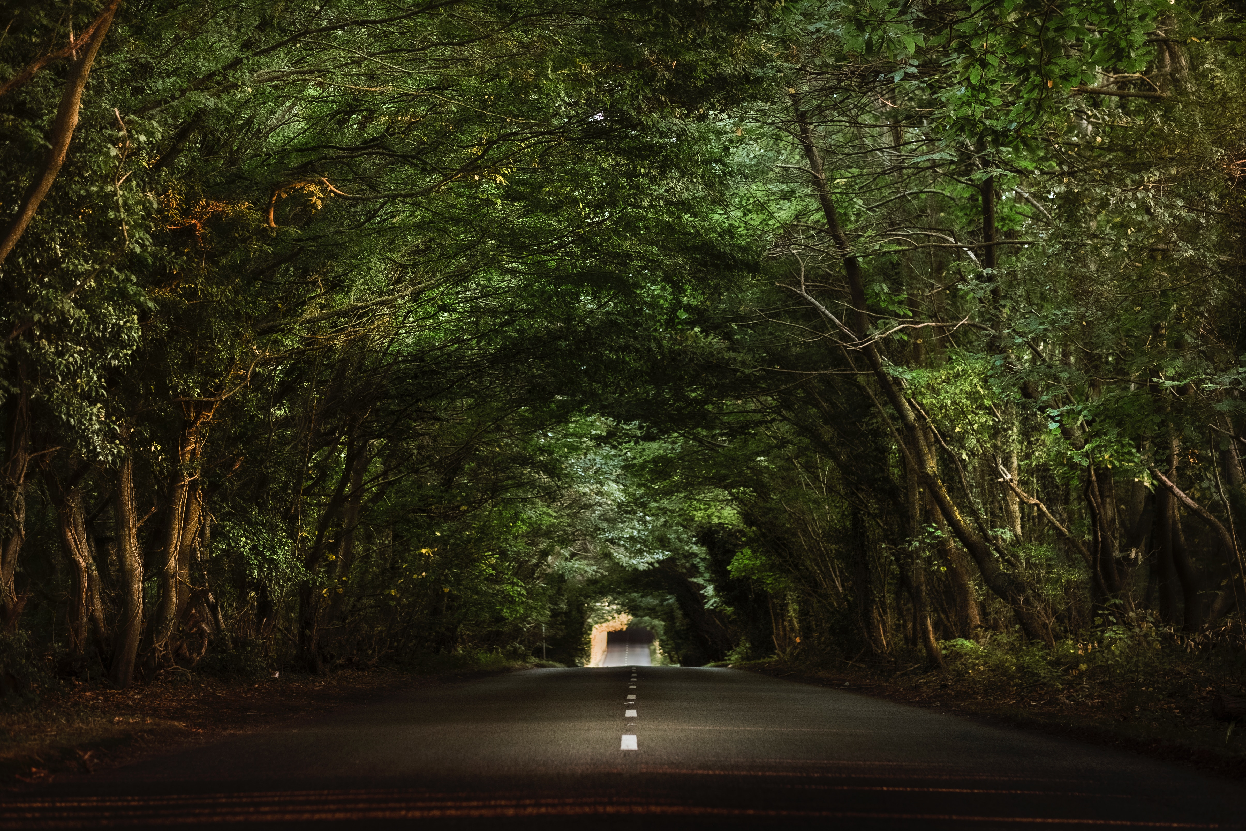 137950 download wallpaper Miscellanea, Trees, Miscellaneous, Road, Asphalt, Branches, Tunnel screensavers and pictures for free