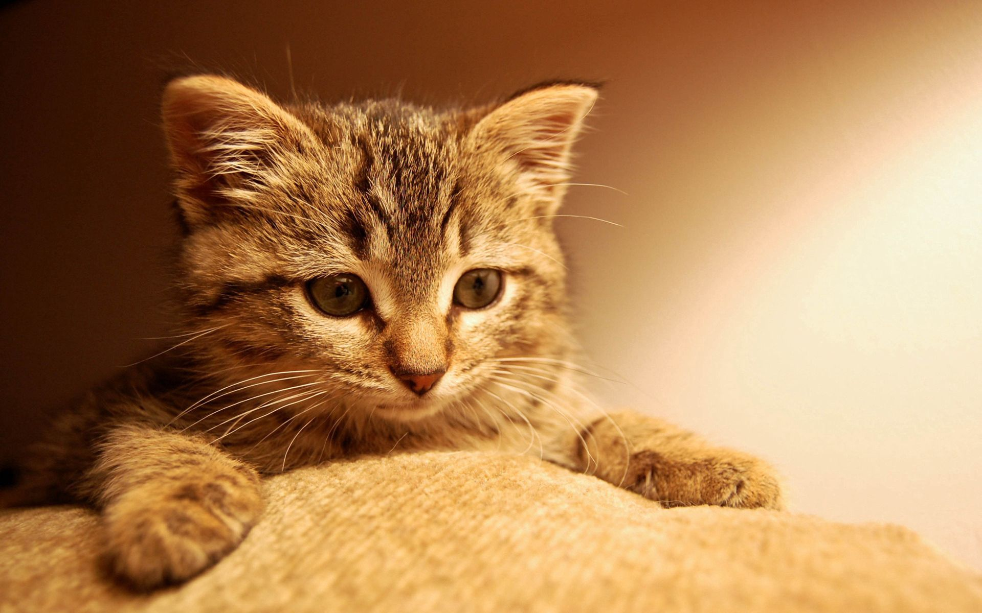 84059 download wallpaper Animals, Cat, Kitty, Kitten, Paw, Muzzle, Eyes, Striped screensavers and pictures for free