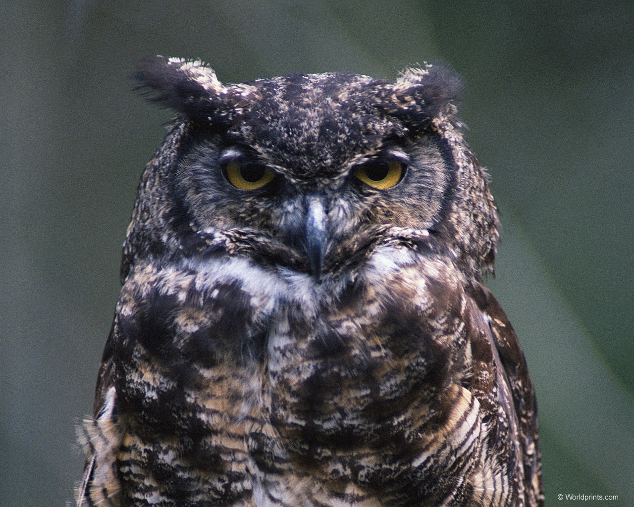 8761 download wallpaper Animals, Birds, Owl screensavers and pictures for free