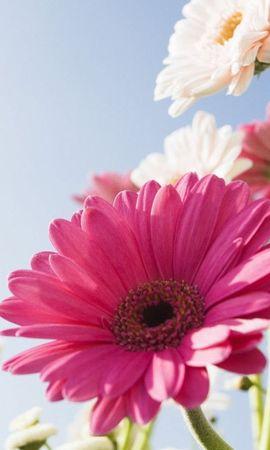 13665 descargar fondo de pantalla Plantas, Flores: protectores de pantalla e imágenes gratis