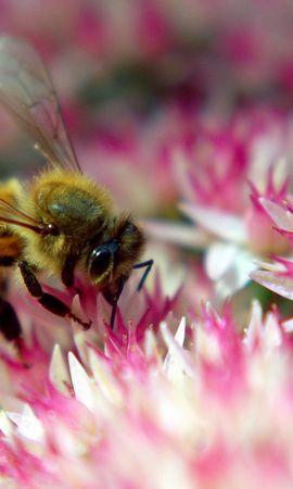 41154 télécharger le fond d'écran Insectes, Abeilles - économiseurs d'écran et images gratuitement